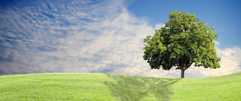 Boom in het veld, dat symbool staat voor de Lindeboom van de Groene Linde