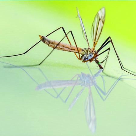 Itsy Bitsy van de Groene Linde, als je gestoken bent door muggen of andere insekten. Je kunt deze roll on direct op de jeukende bult aanbrengen.
