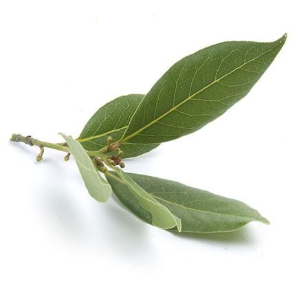 Laurierolie is een etherische olie van de Groene Linde