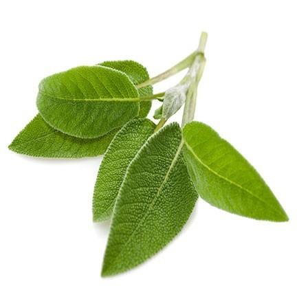 Salie olie is een etherische olie van de Groene Linde