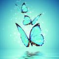 Om te ondersteunen tijdens/na een periode van trauma in ons Fysieke lichaam, ervaar dan de Natuurzuivere Etherische olie van de Groene Linde.