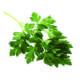 Koriander is een etherische olie van de Groene Linde