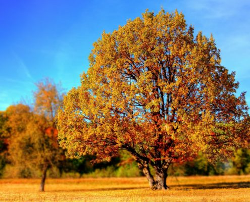 Boom tijdens herfst