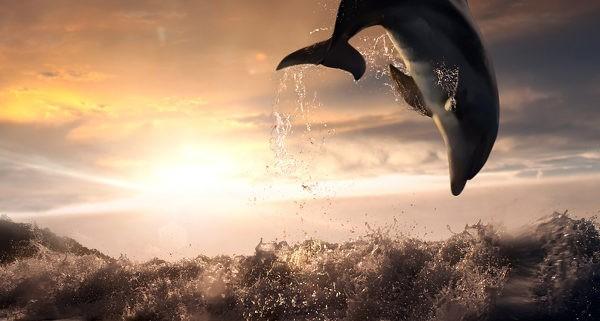 Dolfijn olie de eerste geurfrequentie van de Groene Linde