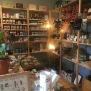 De Groene Linde te koop bij HandPicked in Alkmaar
